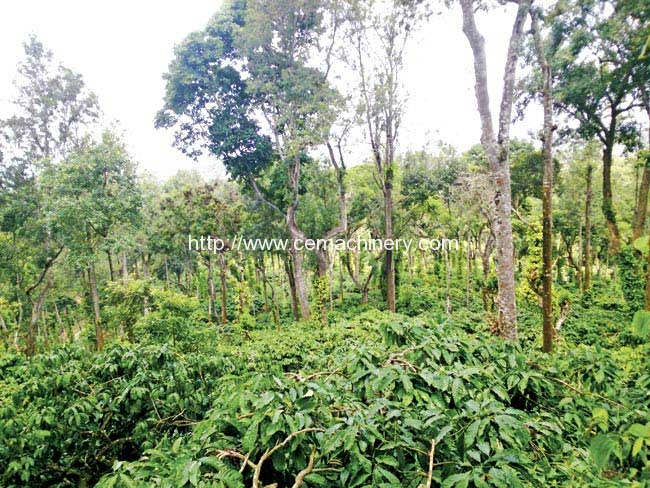 Hit-the-Great-Indian-Coffee-Trail-2