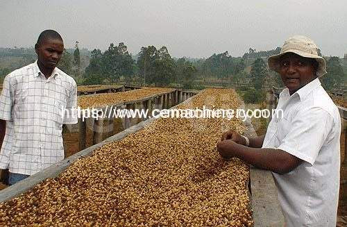 UCDA suspends coffee processing in Busoga