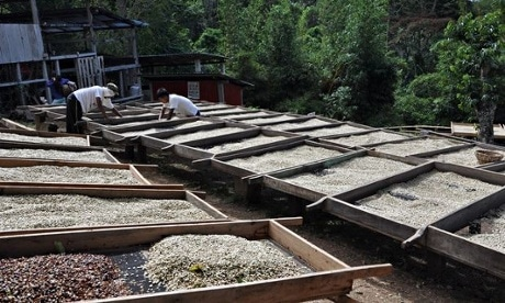 Can coffee stimulate renewable energy in Central America?