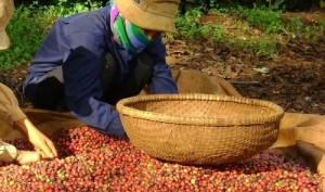 German firm opens $12mn coffee processing facility in southern Vietnam