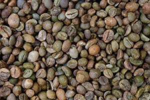 Waste-Bacteria-Help-Coffee-Farmers-Purify-Water